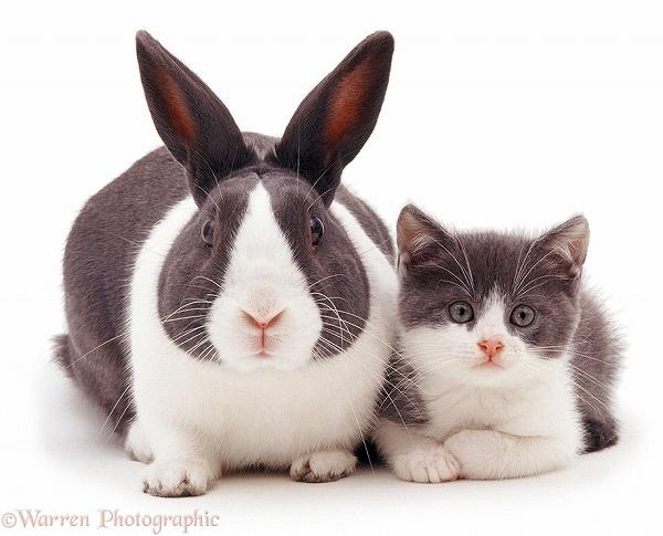 s_twins_matching_animals_01