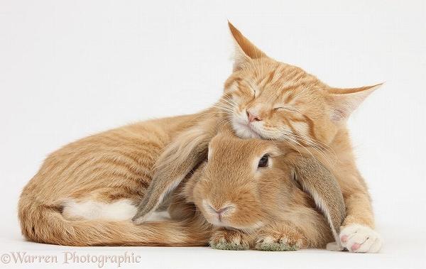 s_twins_matching_animals_03