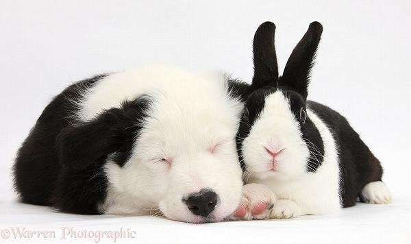 s_twins_matching_animals_04