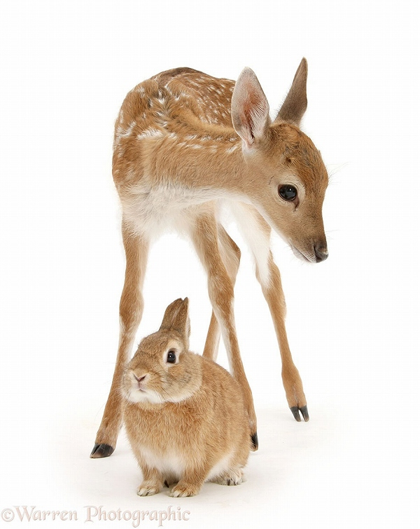 s_twins_matching_animals_05