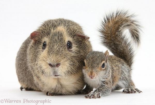 s_twins_matching_animals_06