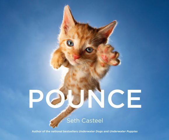 pounce_cover_low-580646dd50e86__880