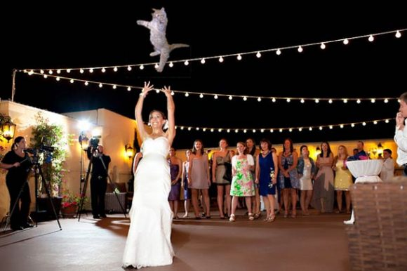 brides-throwing-cats_06