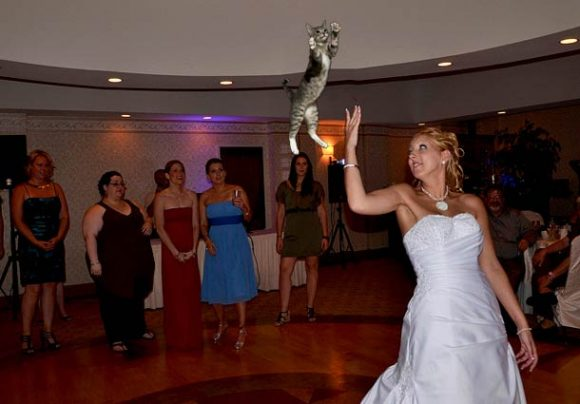 brides-throwing-cats_08