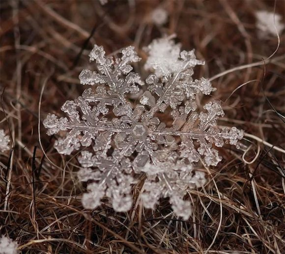 macro-photographs-of-snowflakes-14
