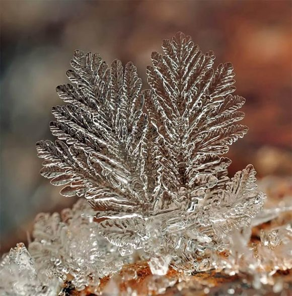 macro-photographs-of-snowflakes-17