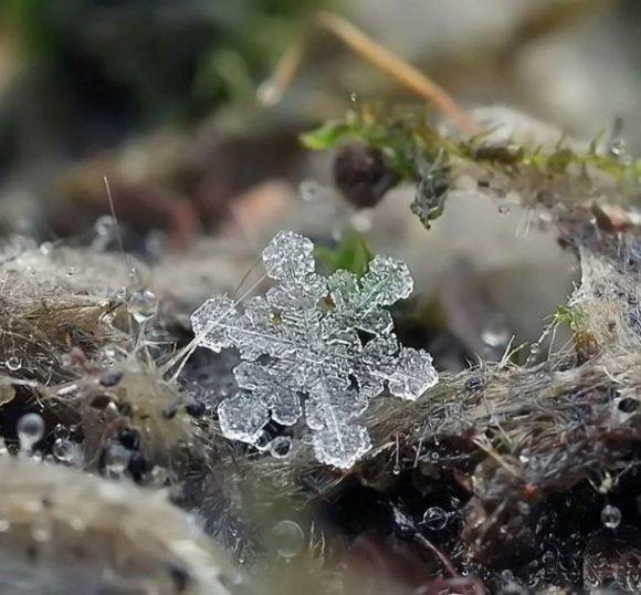 macro-photographs-of-snowflakes-6