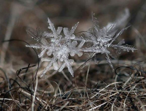 macro-photographs-of-snowflakes-7