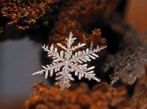 macro-photographs-of-snowflakes-8